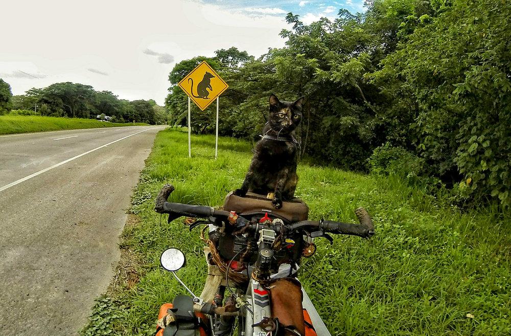 El gato y el ratón - Foto:  Diego Gervasio
