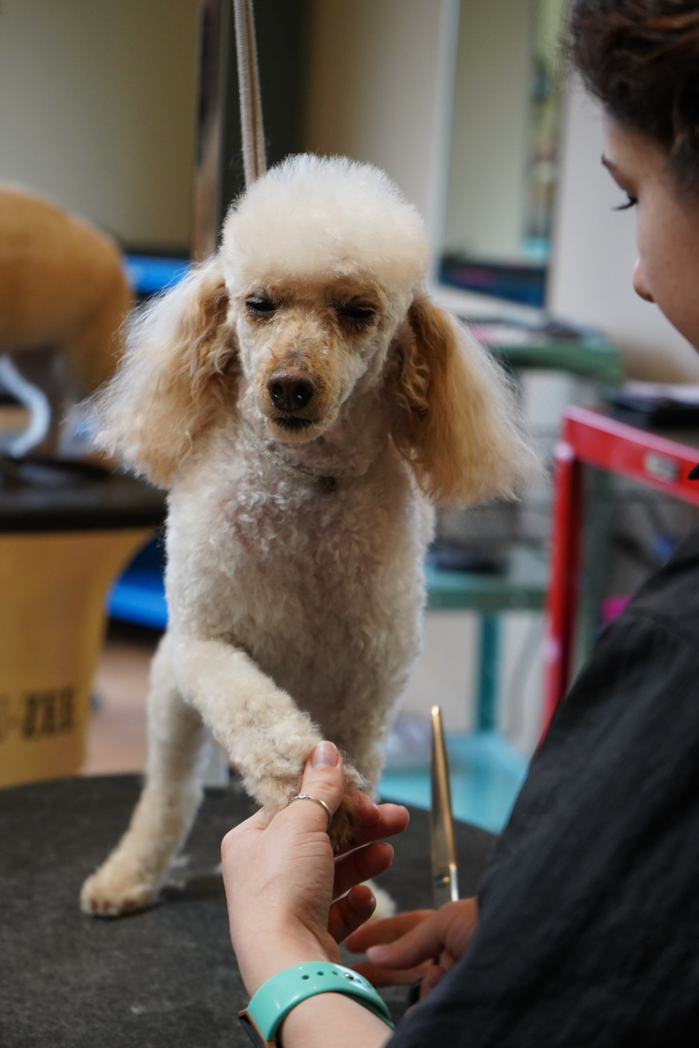 Pet Grooming Plus Michigan School Of Canine Cosmetology