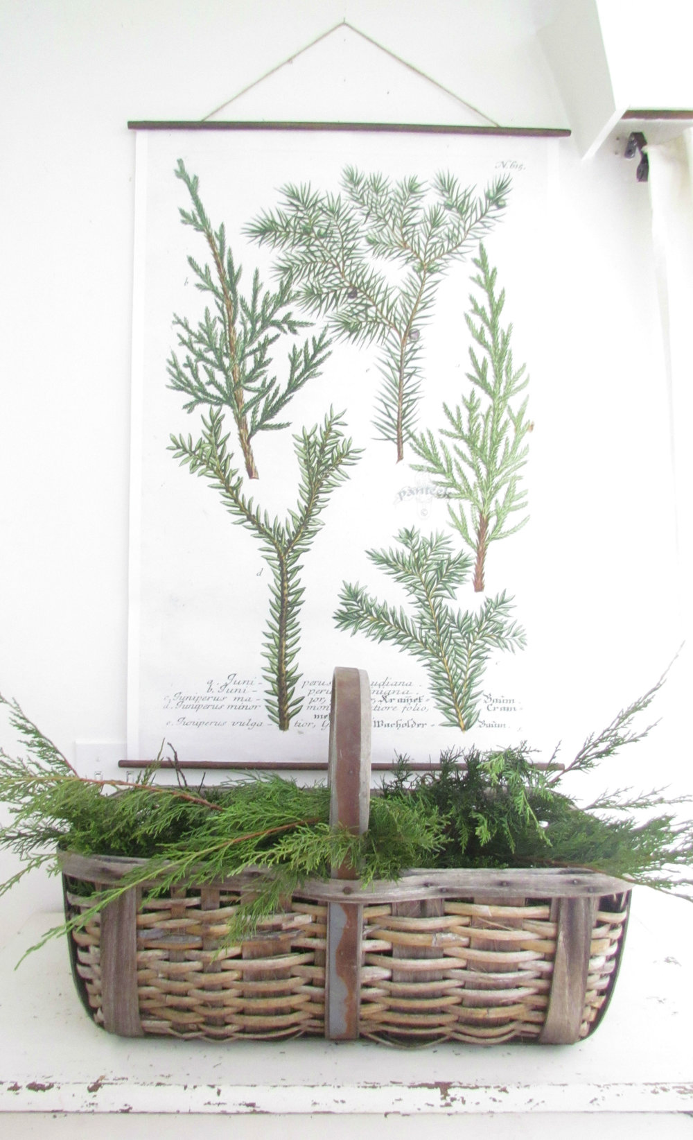 DIY Hanging Juniper Botanical Print3.jpg