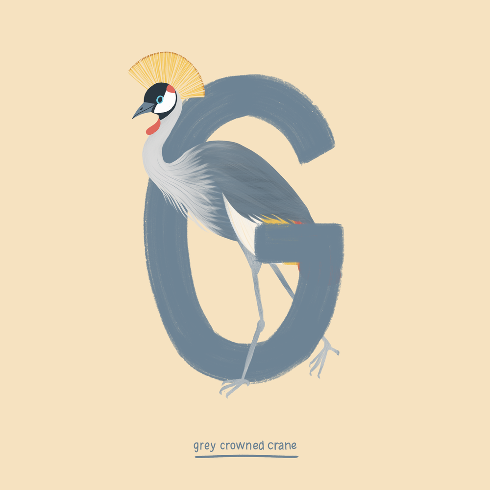 Grey Crowned Crane.png