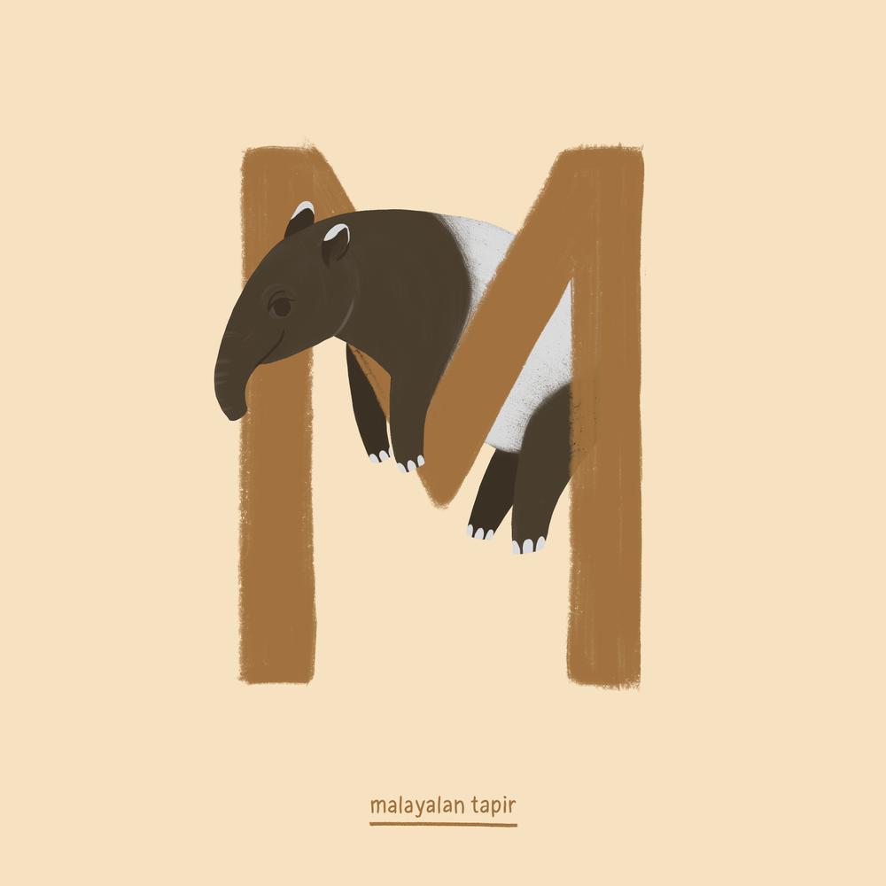 Malayan Tapir.png