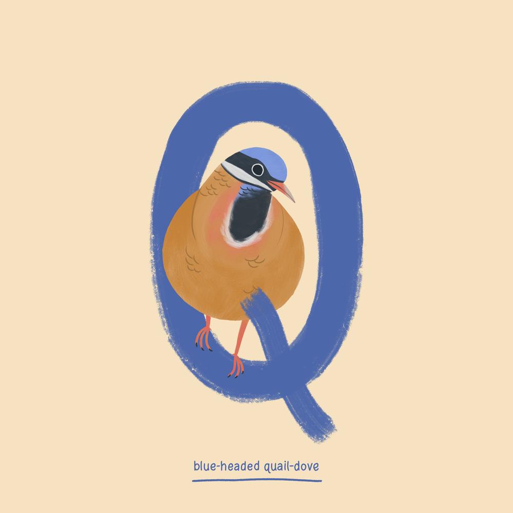 Quail-dove.png