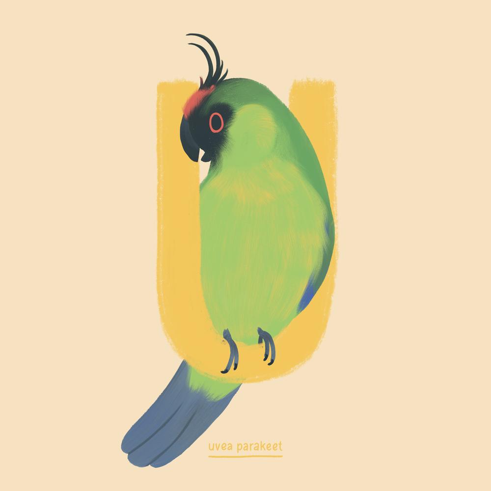 Uvea Parakeet.png