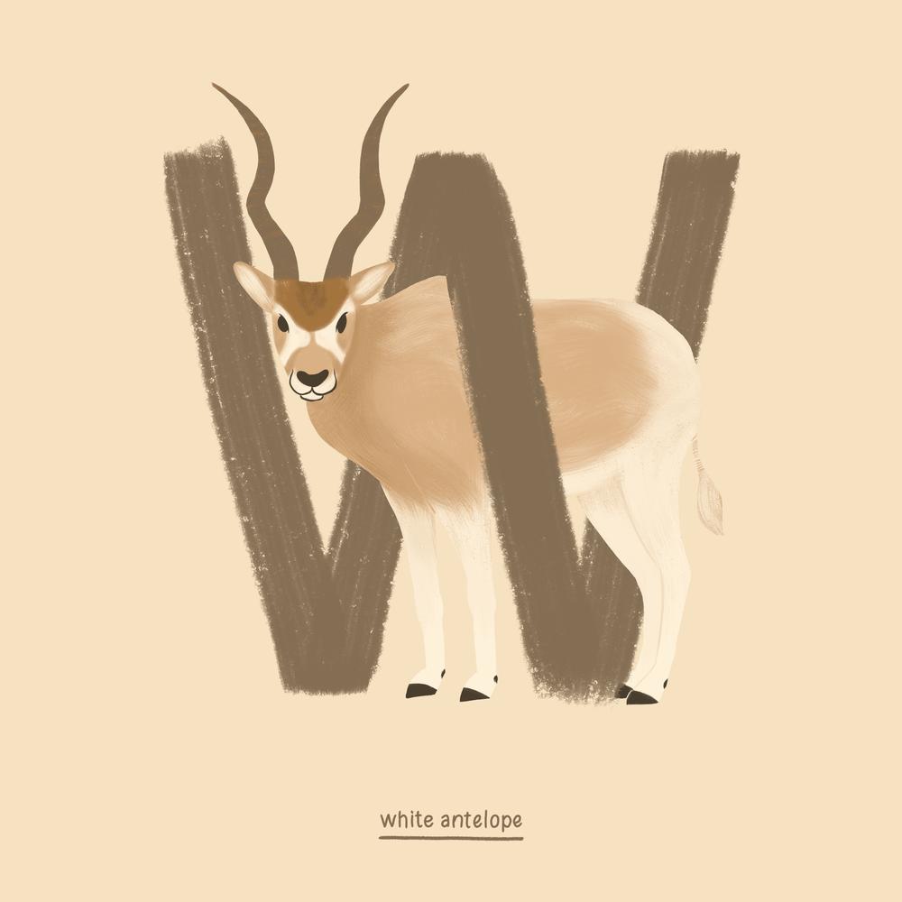 white antelope.png