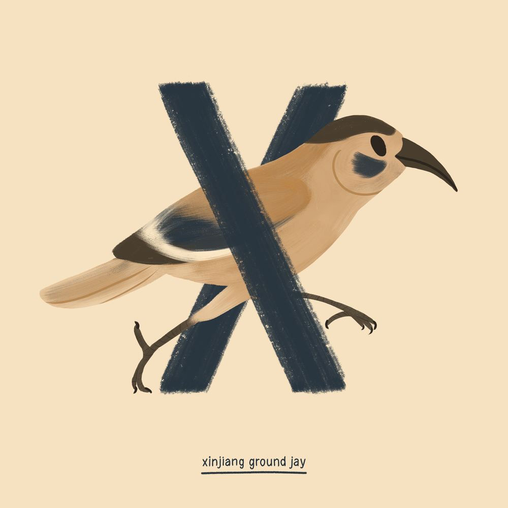 Xinjiang ground jay.png
