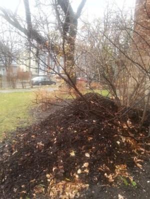 winnipeg compost2.jpg