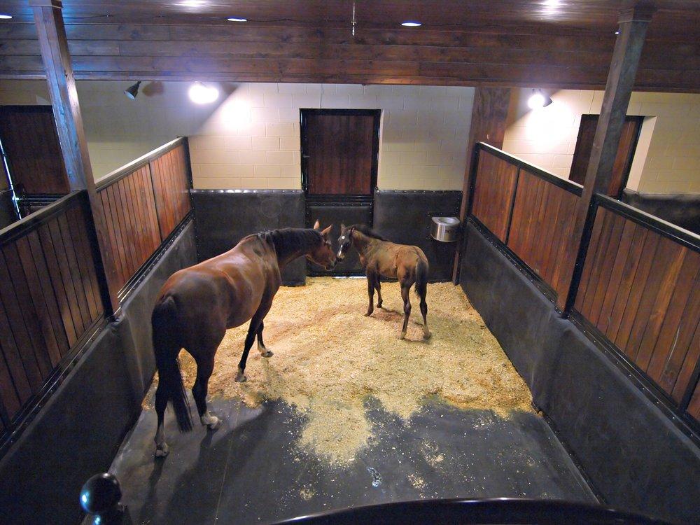 mare&foal.jpg
