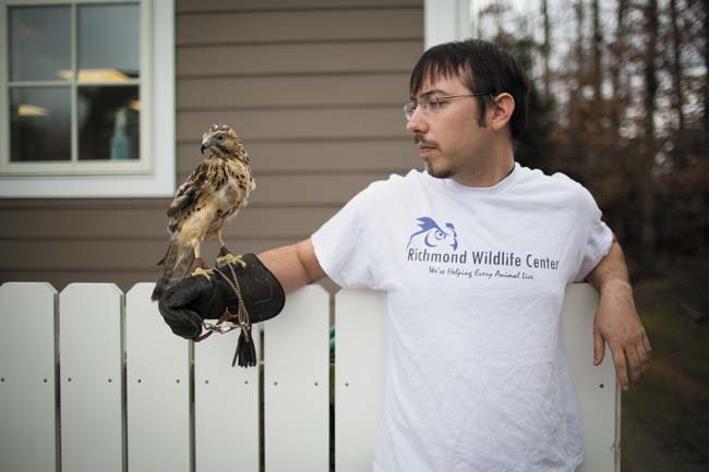 Kevin Lippke takes Keegan, an injured hawk, outside for sunlight and fresh air. (Photo by Chet Strange)