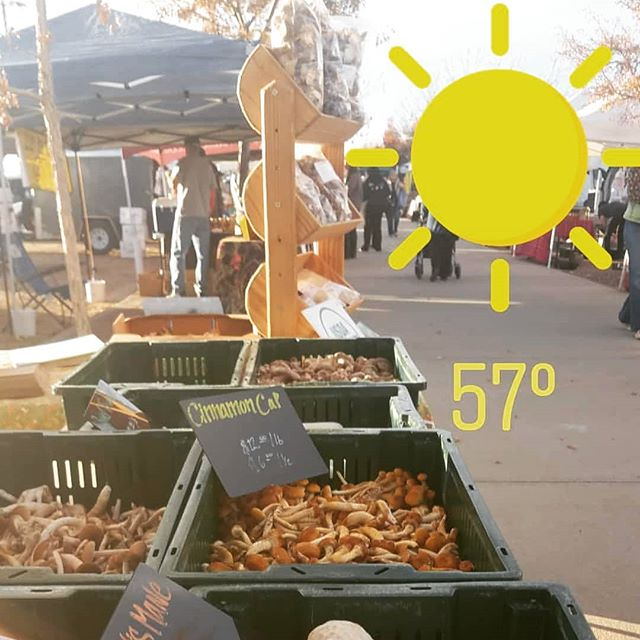 Another beautiful day at @longmontfarmersmarket come visit us! Last market day is November 17th! #mushrooms #farmersmarket #bouldercolorado #longmont #longmontcolorado #fortcollins #northerncolorado #coloradofood #colorado #vegan #superfood #healthy #coloradofoodie #gourmetmushrooms #coloradolocal #windsorcolorado #foodie #bouldervegan #coloradofarmers #milehighcity