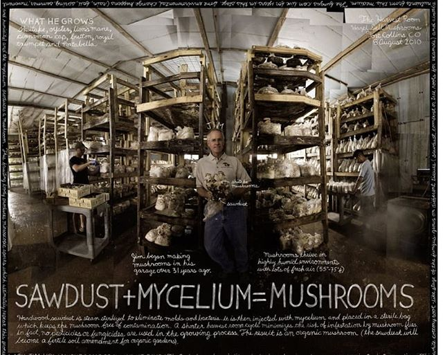 Check out the article on Lexicon of Food (lexiconoffood.com) which interviews Hazel Dell owner, Jim! He has been growing mushrooms for over 30 years! He started in his garage and now he owns the largest mushroom farm in Colorado! Thanks Jim for all your hard work! #mushrooms #mycology #fungi #superfood #vegan #healthfood #coloradofood #colorado #northerncolorado #fortcollins #milehighcity #foodie #bouldercolorado #longmont #longmontcolorado #farmersmarket #healthy #coloradofoodie #gourmetmushrooms #coloradolocal #windsorcolorado #mushroomgrowing #hazeldellmushrooms