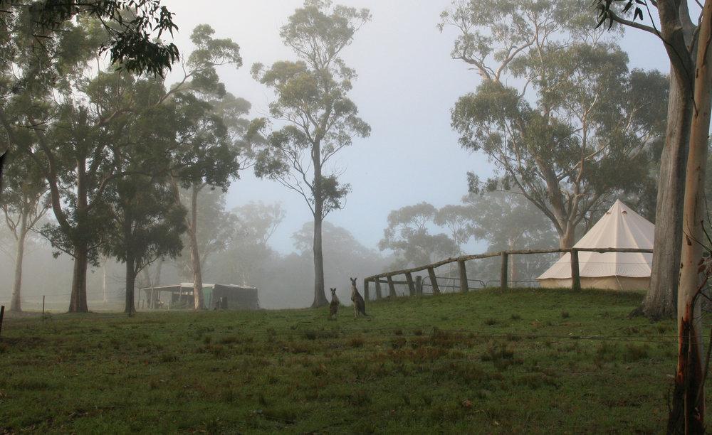 kangaroo at camp.jpg