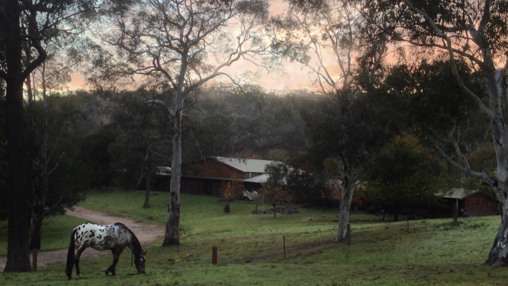 early morning at Megalong
