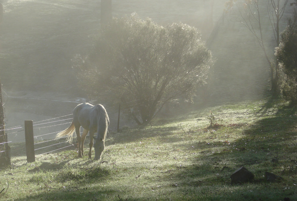 early morning horse 2.jpg