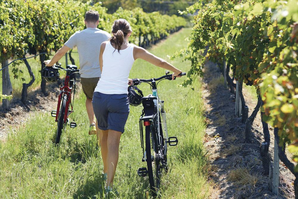 Vineyard Bike Ride