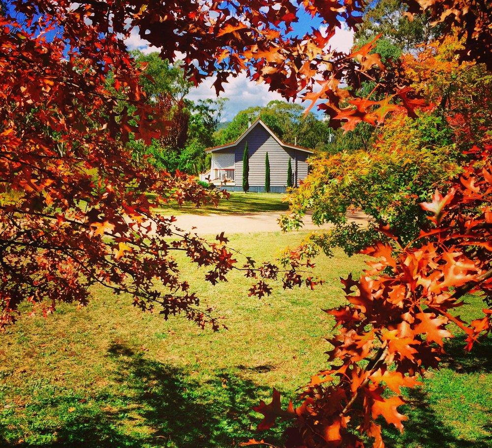 Oak Trees at Diamondvale