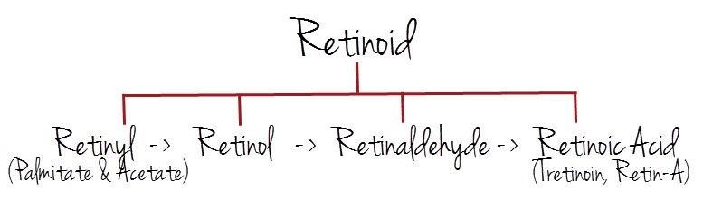 En el esquema podemos ver los distintos tipos de retinoides utilizados en cosmética, siendo el último (ácido retinoico) el que presenta mayores efectos terapéuticos.