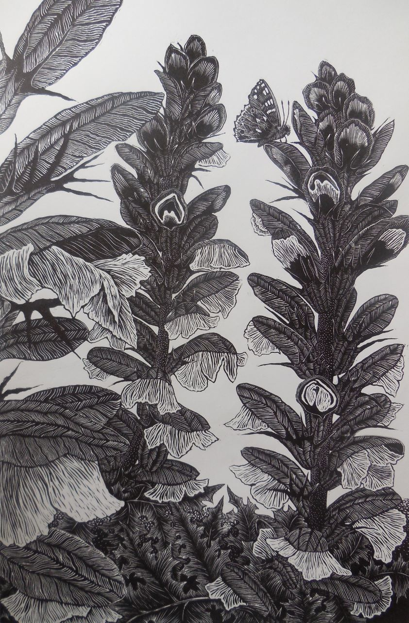 Acanthus Spires.jpg