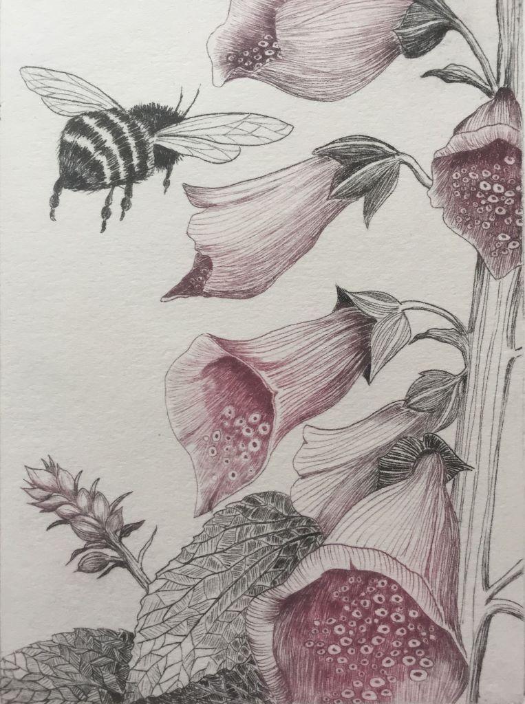 Foxglove and Bee.jpg