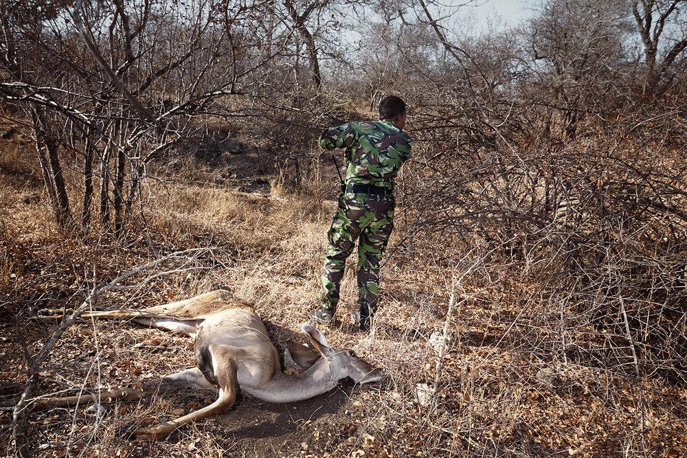 Black Mamba Yenzekile & a dead kudu