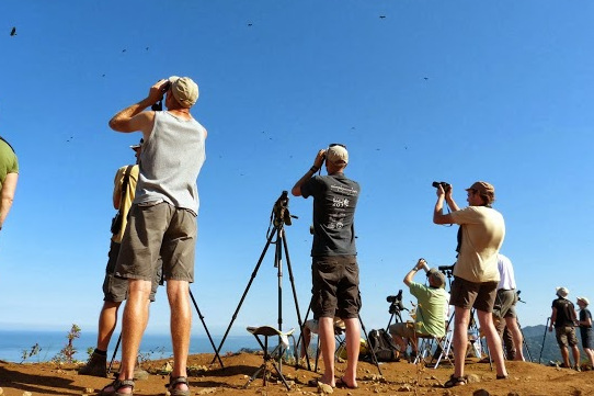Visitors and volunteers enjoy the raptor spectacle overhead. Photo by Olivier Dochy.