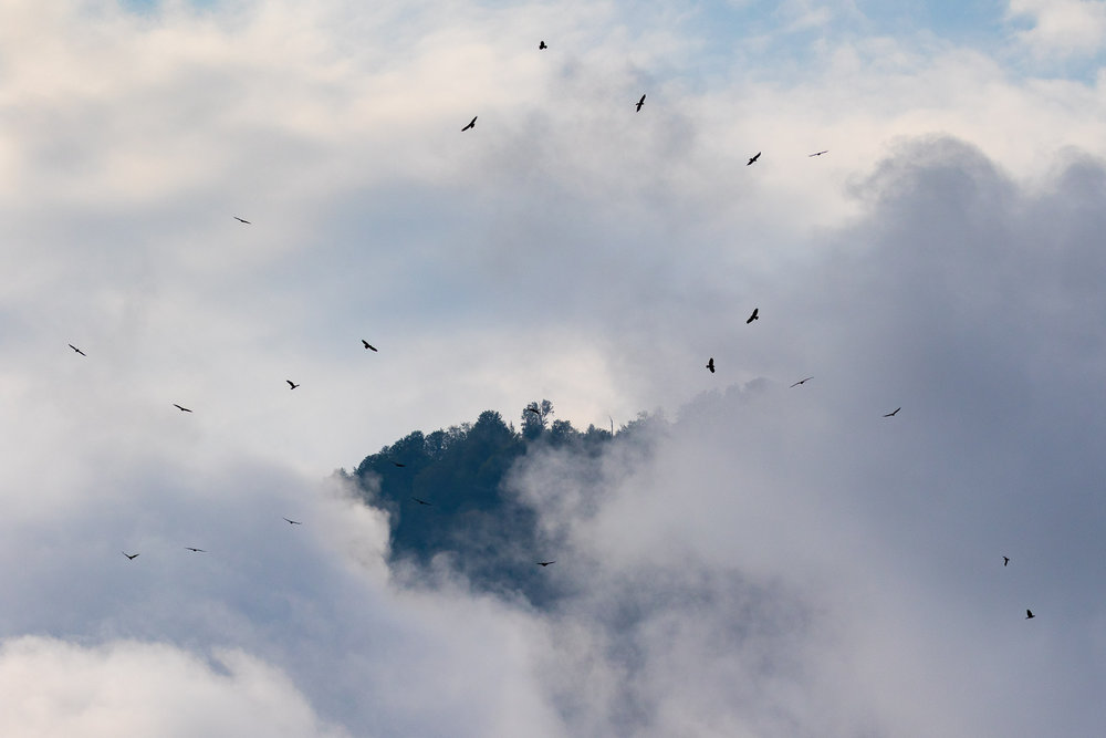 Flock of Steppe Buzzards popping out ('degloupsing') of the clouds. Photo by Bart Hoekstra.