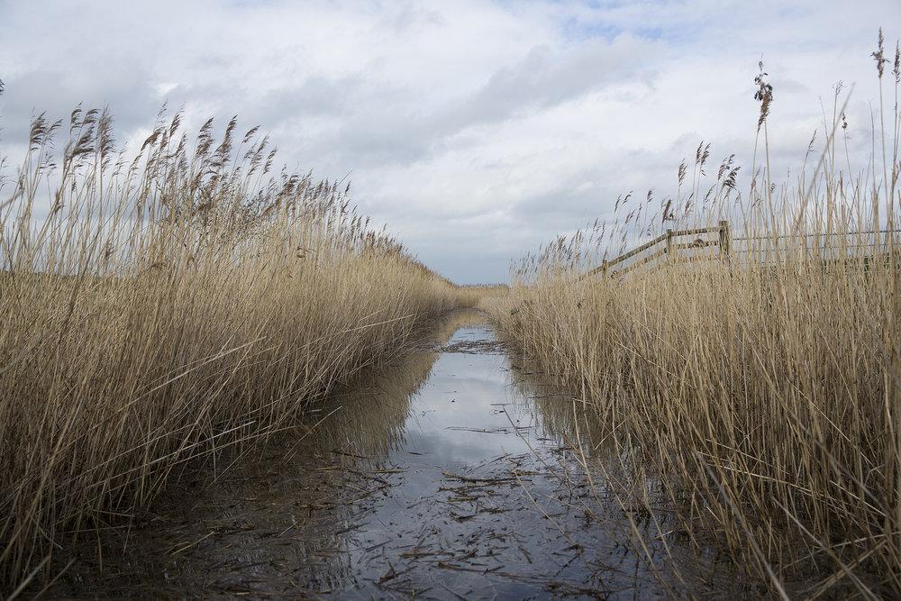 Elmley Nature Reserve