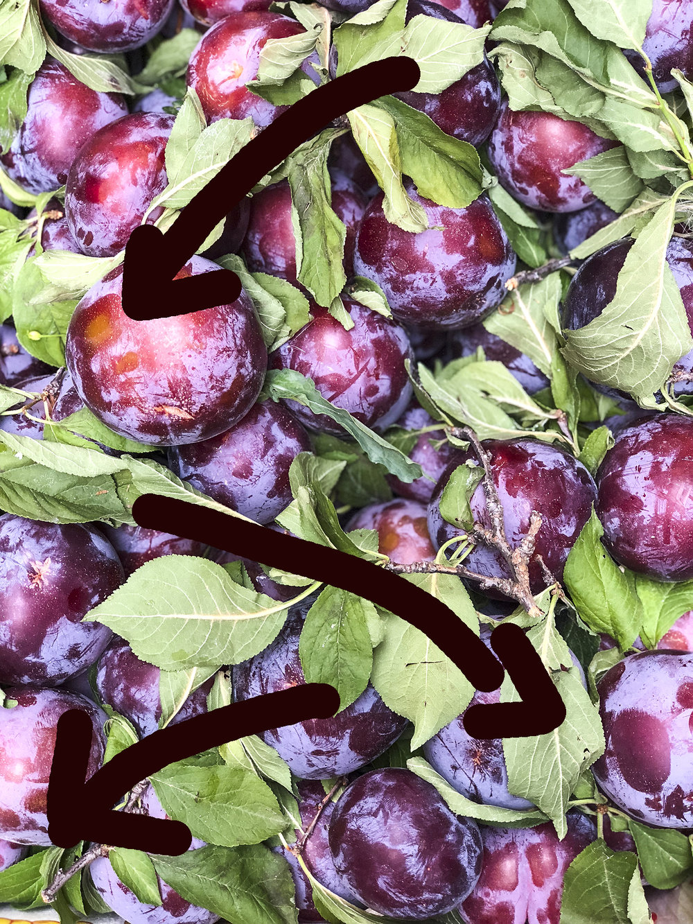 plums with lines.jpg