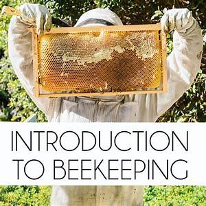 introtobeekeeping.jpg