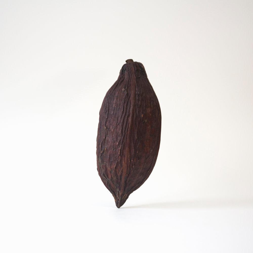 cacao-pod-01.jpg