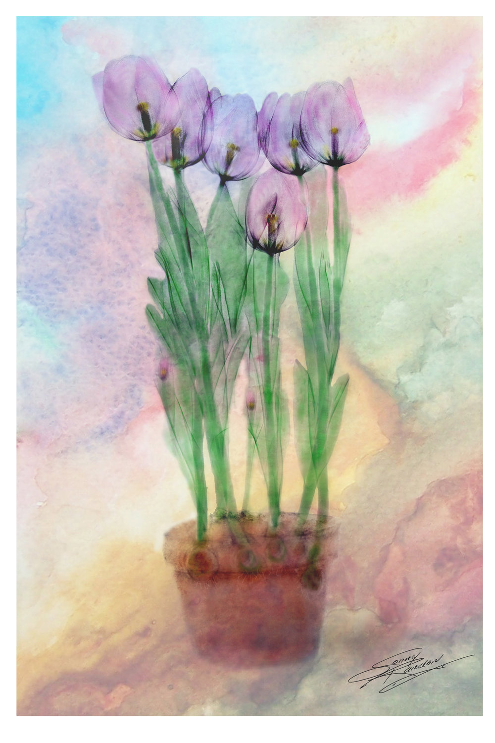 tulips xray _ no border.jpg