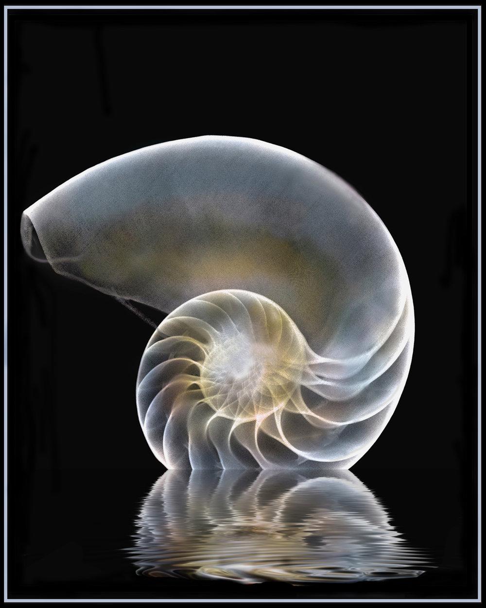 Untitled-1-ret white bkg.jpg