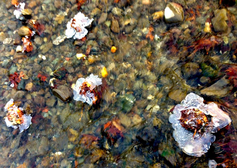 iceflowers.jpg