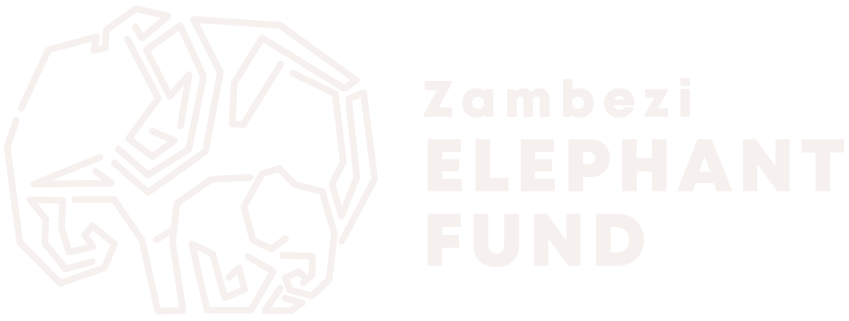 Zambezi Elephant Fund