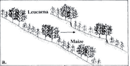 Slope to Terrace.png