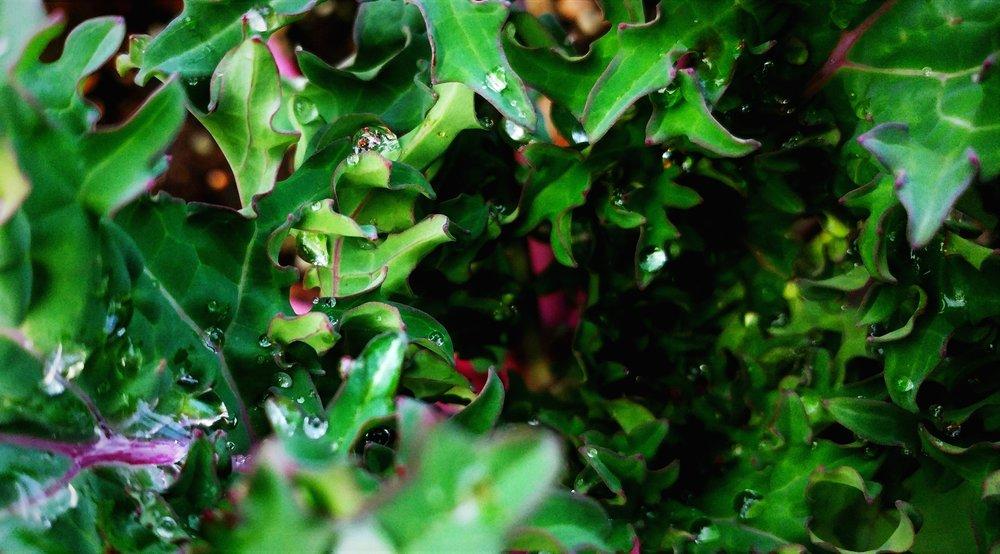 Perennial food gardens