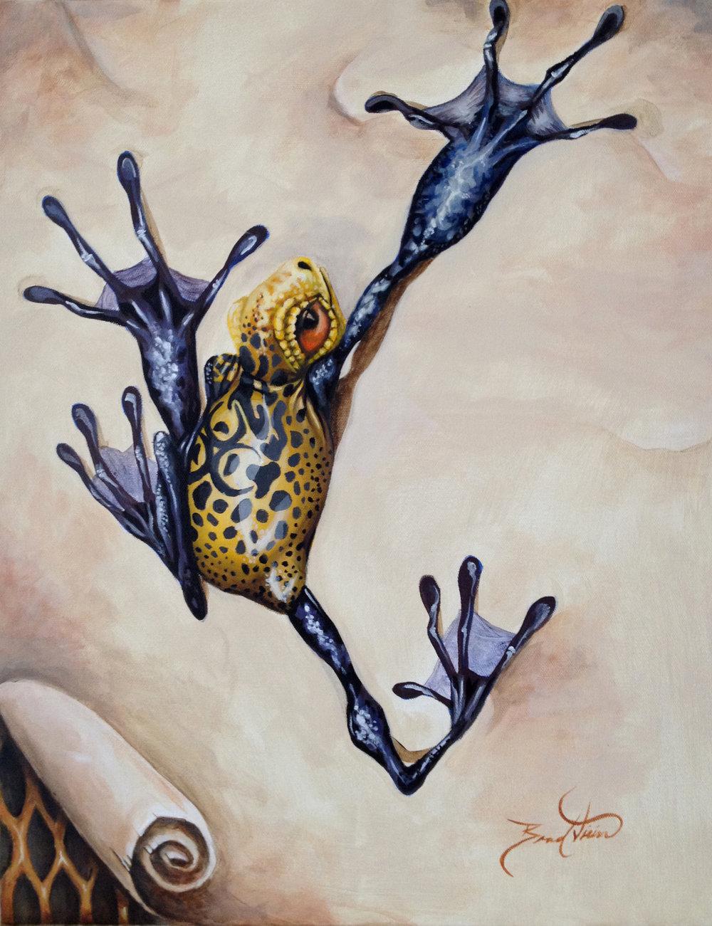 Honey Frog.jpg
