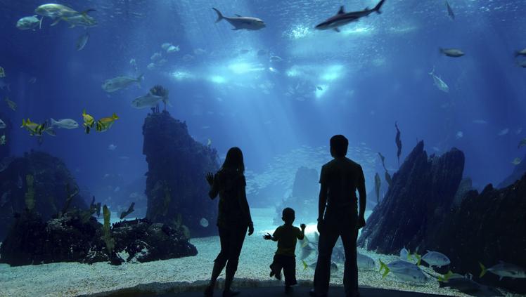 long-beach-aquarium.jpg