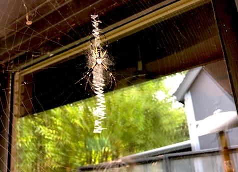 1 spider.JPG