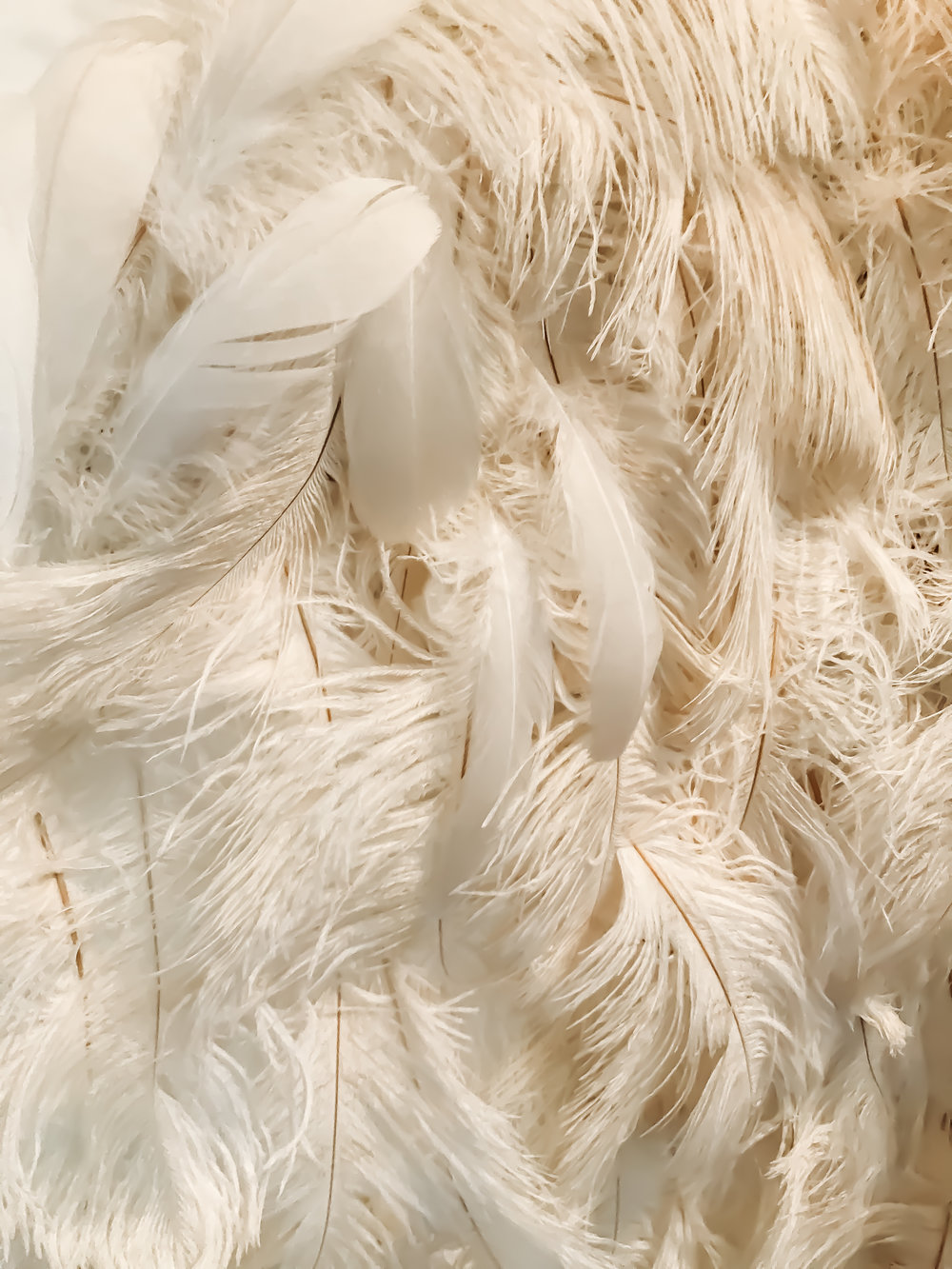 Up close of ostrich feathers - bones showing