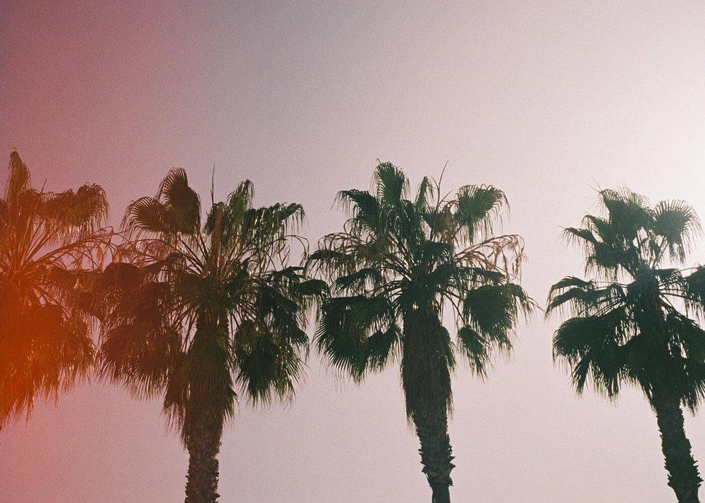 TenerifePalms@2x.jpg