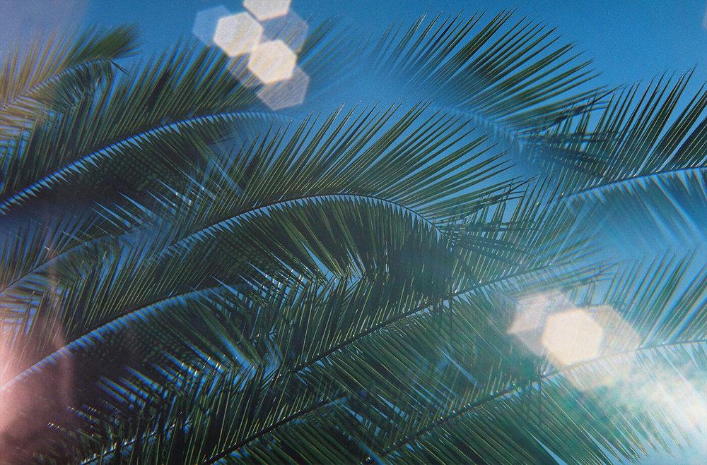 Palms@2x.jpg