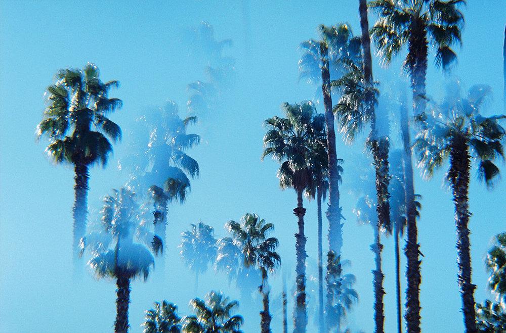 Trees@2x.jpg