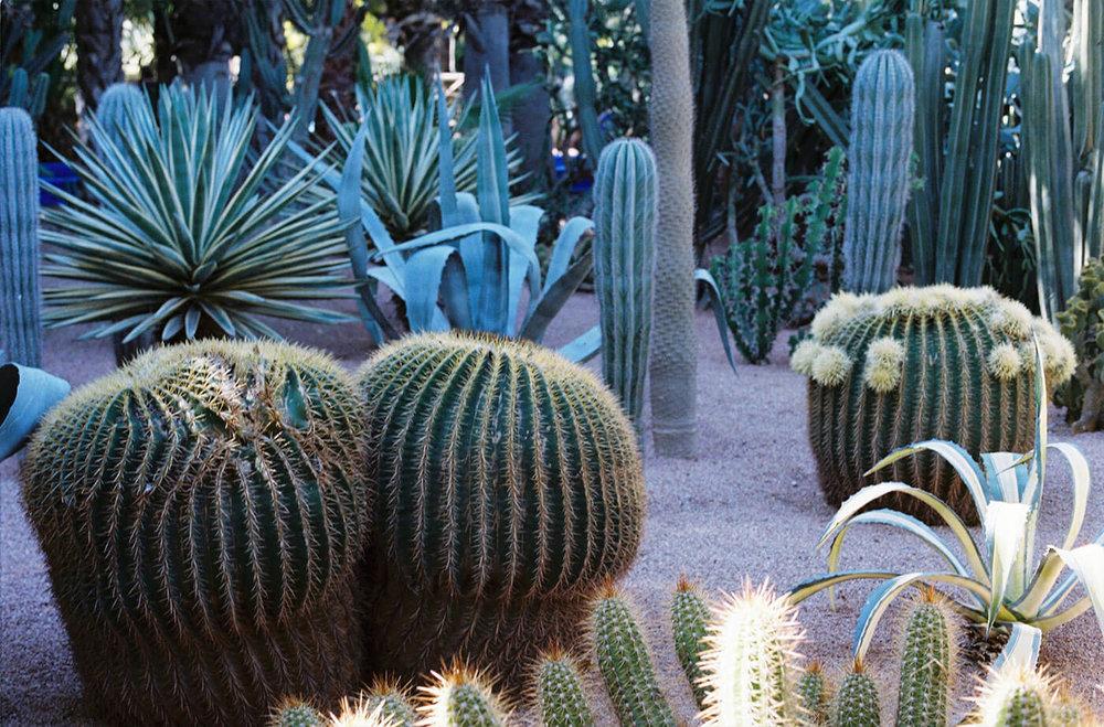 Cacti@2x.jpg