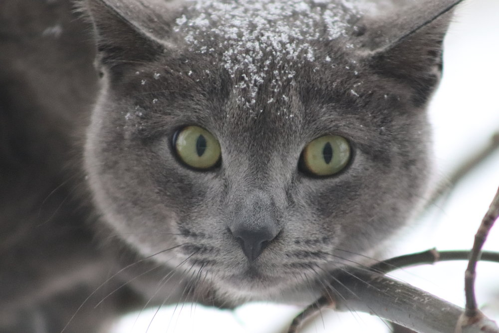 Elleryh - Feral Cat 2.JPG