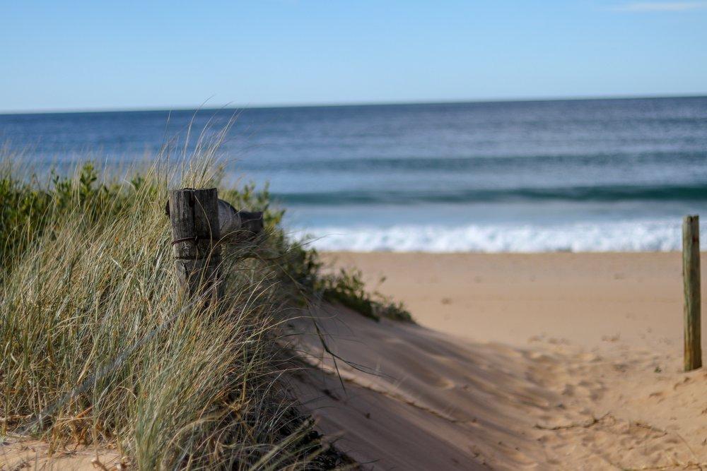 Werri Beach through the grass