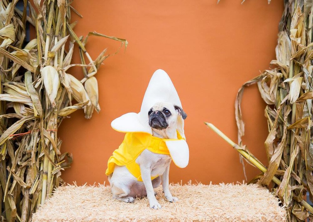 MUTTS Howl-O-Ween - Saturday, October 20 | MUTTS Cantina
