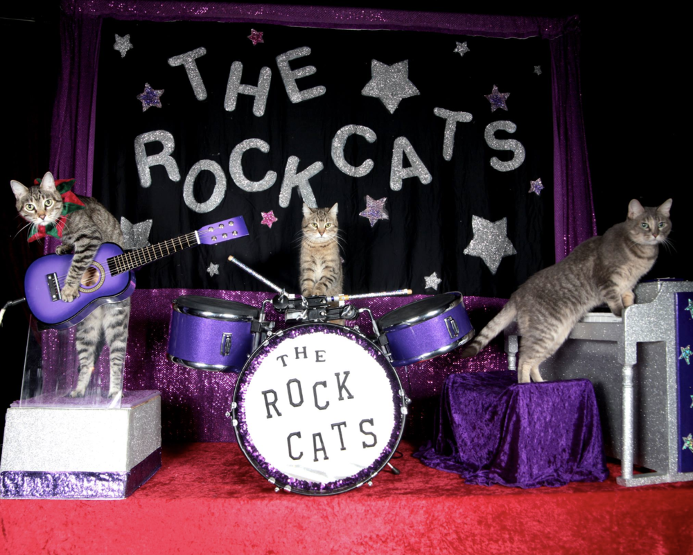 The Acro-Cats with Tuna and the Rock Cats - Thursday, January 17 | Texas Theatre