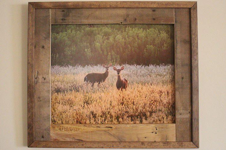 Deer @ Old Field (16x20)
