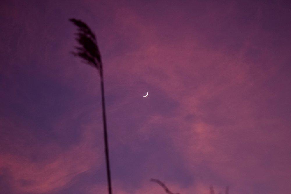 Moon Over Phragmites (Iron Pier Beach)