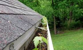 Gutter Debris   Can lead to ice dams later in the year. Your roofing contractor may provide gutter cleaning services if you decide you're not comfortable about doing the job yourself.